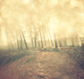 Light burst among meadow trees filtered image Royalty Free Stock Photography