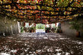 Light dappled patio a vine covered in a vineyard in south australia Stock Image