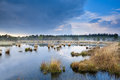 Light fog over swamp after the rain drenthe Royalty Free Stock Photos