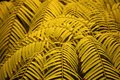 LIGHT GREEN FERN LEAVES IN A HOT HOUSE Royalty Free Stock Photo