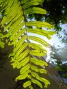 Light through green ferns and spores in tropical bright garden Stock Image