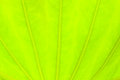 Light green leaf abstract nature background Royalty Free Stock Photo