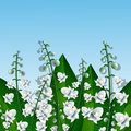 Light lilies of the valley against sky Royalty Free Stock Images