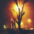 Light rays and tree during foggy night in the city Royalty Free Stock Photography