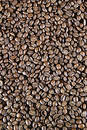 Light Roast Beans Royalty Free Stock Photos