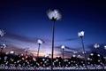 Light Sensation Royalty Free Stock Photo