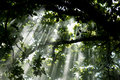 Light under the trees Royalty Free Stock Photo
