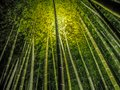 stock image of  Light up to bamboo forest
