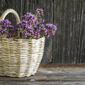 Light wicker basket with a bouquet of blossoming oregano on dark wooden background