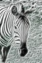 Light zebra with the look Stock Photography