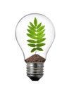 Lightbulb with rowan leaf inside Royalty Free Stock Photo