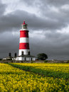 Lighthouse on rape field with around Royalty Free Stock Photo