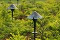 Lighting mushroom shape Στοκ φωτογραφία με δικαίωμα ελεύθερης χρήσης