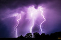 Lightning bolts multiple strike the ground just behind a group of trees Stock Image