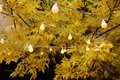 Lights on orange trees in fall Royalty Free Stock Photo