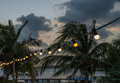 Lights and palmtrees at a holiday resort Royalty Free Stock Image