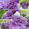 Lilac collage Royalty Free Stock Photo