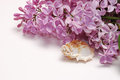 Lilac flower bunch and seashell isolated on white background Royalty Free Stock Photo