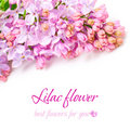 Lilac flower - Floral Background Royalty Free Stock Photo