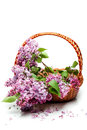 Lilac flowers in basket isolated on white Royalty Free Stock Photo