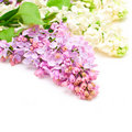 Lilac flowers bouquet Royalty Free Stock Images
