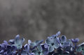 Lilac flowers macro composition frame purple pink syringa vulgaris or common close up Stock Photography