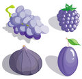 Lilac fruit Royalty Free Stock Photography