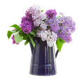 Lilac in garden pot vase isolated on white background Stock Photos