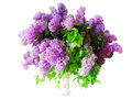 Lilac isolated in a vase Royalty Free Stock Photos