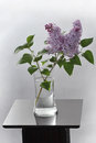 Lilacs this is a still life photo of a vase with and foliage on a pedestal Royalty Free Stock Images