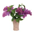 Lilacs in a wicker vase isolated Royalty Free Stock Photo