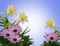 Lilies and Daisies Floral Background Royalty Free Stock Photography