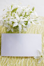 Lilies flowers with a card white delicate spring on white board Stock Photo