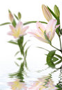 Lilies - spa concept Royalty Free Stock Photos