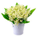Lilies of the valley  on white background Royalty Free Stock Photo