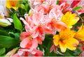 Lilium orientale Almeria