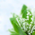 Lilly of the valley flowers on blue bokeh background Stock Photo