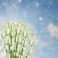 Lilly of the valley flowers on blue sky bokeh background Royalty Free Stock Photos