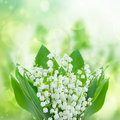 Lilly of the valley flowers posy oflilly close up on green bokeh background Royalty Free Stock Image