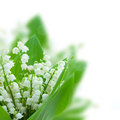 Lilly of the valley posy isolated on white background Royalty Free Stock Image