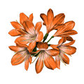 Lily bouquet sketch vector graphics