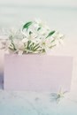 Lily with card white delicate spring flowers on white board Stock Photography