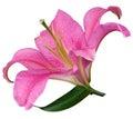 Ľalia kvetina