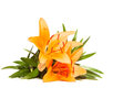 Lily flower isolated on a white background orange Royalty Free Stock Images