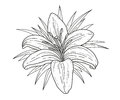 Lily flower monochrome vector illustration. Beautiful tiger lilly isolated on white background. Element for design Royalty Free Stock Photo
