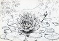 Lily flower on the swamped pond and buds and leaves surface of a swampy ink drawn sketch Royalty Free Stock Photos