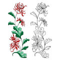 Lily flower  on white. Vector illustration. Royalty Free Stock Photo