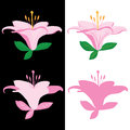Lily leaf front