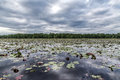 Lily pads on wide lake scenic view of with cloudscape background Stock Photo