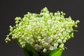 Lily of the Valley bouquet Stock Images
